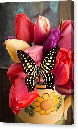 Tulips And Butterflies Canvas Print by Edward Fielding