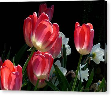 Canvas Print featuring the photograph Tulips And Daffodils by Lucinda Walter