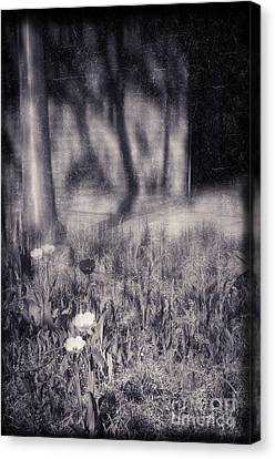 Tulips And Tree Shadow Canvas Print by Silvia Ganora