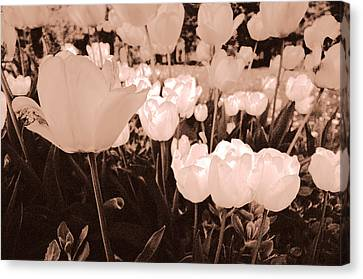 Canvas Print featuring the photograph Tulips by Arkady Kunysz
