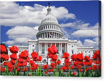 Tulips Bloom In Front Of The Capitol Canvas Print