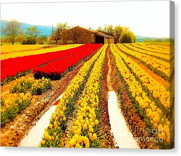 Tulips Field In Provence By A Farm Stone House France Canvas Print by Flow Fitzgerald