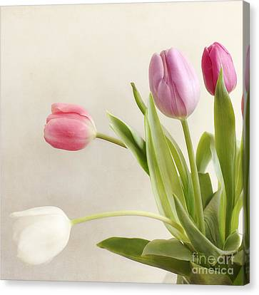 Tulips Canvas Print by LHJB Photography