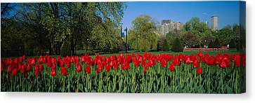 Tulips In A Garden, Boston Public Canvas Print by Panoramic Images