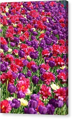 Tulips In A Meadow Canvas Print