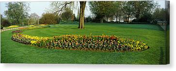 Tulips In Hyde Park, City Canvas Print by Panoramic Images