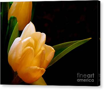 Tulips In Study 3 Canvas Print