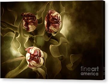 Tulips In The Mist II Canvas Print