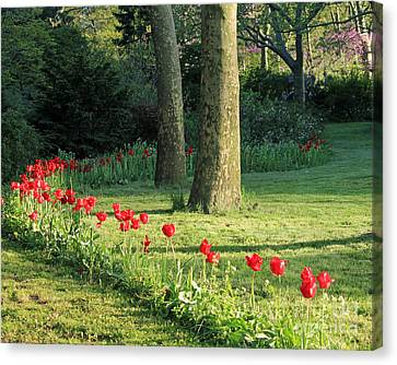 Canvas Print featuring the photograph Tulips In The Park by Jose Oquendo