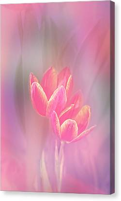 Tulips In The Pink Canvas Print
