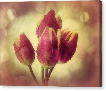 Tulips In The Rain Canvas Print by Anne Macdonald