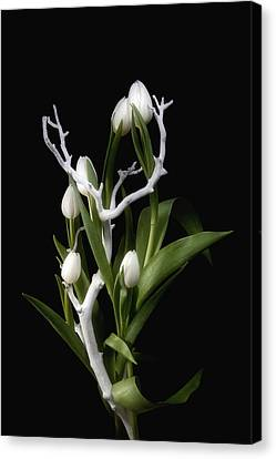 Tulips In Tree Branch Still Life Canvas Print by Tom Mc Nemar