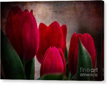 Tulips Canvas Print by Judy Wolinsky
