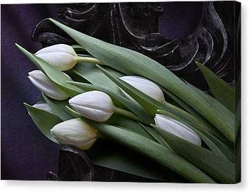 Tulips Laying In Wait Canvas Print by Tom Mc Nemar