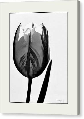 Canvas Print featuring the photograph The Light Within by Marija Djedovic