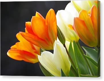 Canvas Print featuring the photograph Tulips by Marilyn Wilson