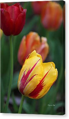Tulips On Fire II Canvas Print by Suzanne Gaff