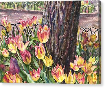 Tulips On The Mall Canvas Print by Anne Gifford