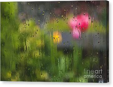 Tulips Through The Rain Canvas Print by Maria Janicki