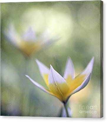 Tulips Canvas Print by Uma Wirth