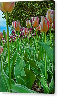 Tulips vertical in low viewpoint photograph by valerie garner - Valerie garnering ...