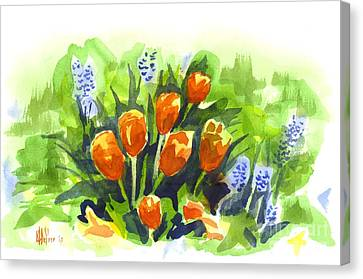 Tulips With Blue Grape Hyacinths Explosion Canvas Print by Kip DeVore