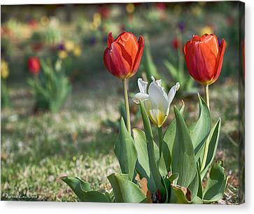 Canvas Print featuring the photograph Tulips by Yvonne Emerson AKA RavenSoul