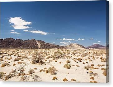 Tumbleweed Growing In The Mojave Desert Canvas Print