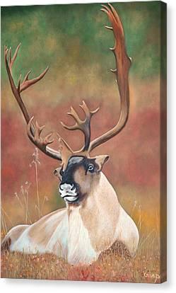 Tundra Caribou Canvas Print by Jean Yves Crispo