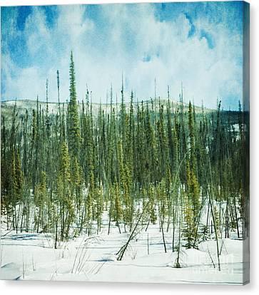Tundra Forest Canvas Print by Priska Wettstein