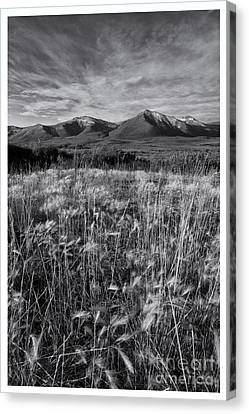 Tundra Summer Canvas Print
