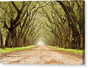 Tunnel In The Trees Canvas Print by Scott Pellegrin