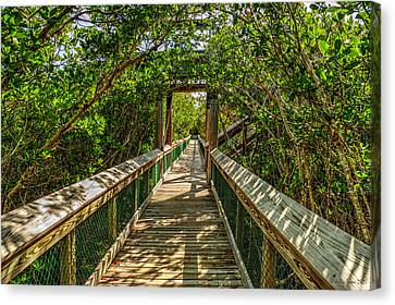 Tunnel Of Mangrove Green Canvas Print by Julis Simo