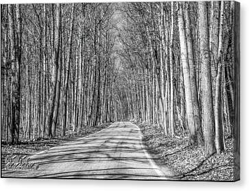 Tunnel Of Trees Black And White Canvas Print