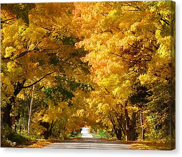 Tunnel Of Yellow Leaves Canvas Print