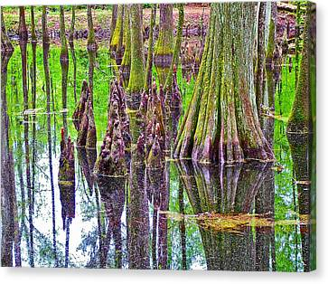 Tupelo/cypress Swamp Reflection At Mile 122 Of Natchez Trace Parkway-mississippi Canvas Print by Ruth Hager