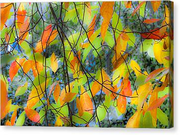 Tupelo Tapestry - Glowing Leaves Canvas Print by Saxon Holt