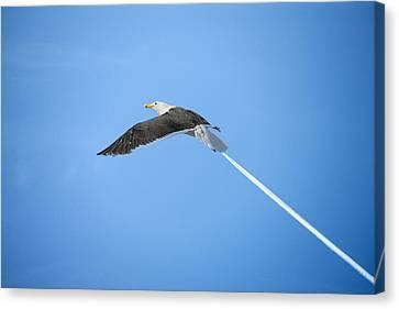 Turbo Seagull Canvas Print by Michael Mogensen