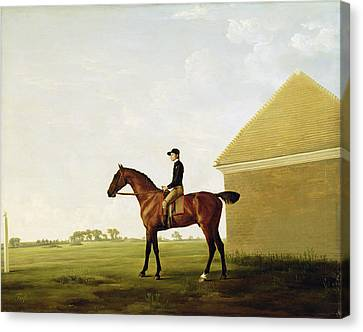 Turf Canvas Print by George Stubbs