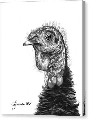 Turkey Bird Canvas Print by J Ferwerda