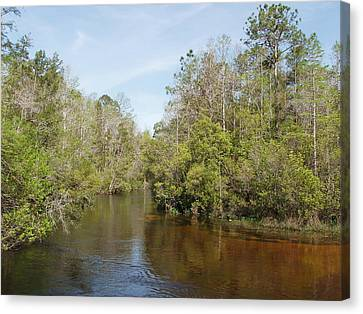 Canvas Print featuring the photograph Turkey Creek Nature Trail In Niceville Florida by Teresa Schomig