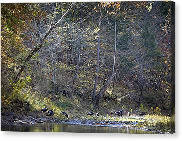 Turkey Crossing At Big Hollow Canvas Print by Michael Dougherty
