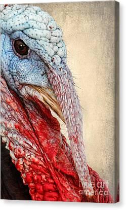 Turkey Canvas Print by Darren Fisher
