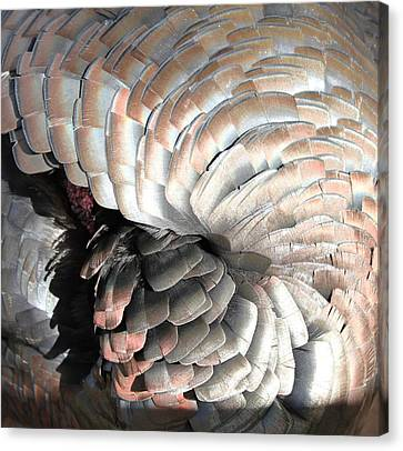Canvas Print featuring the photograph Turkey Siesta by Diane Alexander