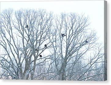 Canvas Print featuring the photograph Turkey Tree by Dacia Doroff