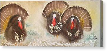 Turkeys Canvas Print