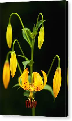 Canvas Print featuring the photograph Turks Cap Candelabra by Photography  By Sai