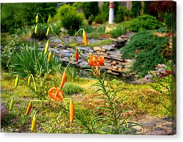 Canvas Print featuring the photograph Turk's Cap Lily by Kathryn Meyer