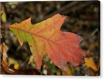 Turn A Leaf Canvas Print by JAMART Photography