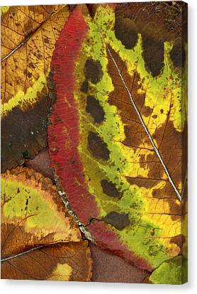 Turning Leaves 3 Canvas Print by Stephen Anderson
